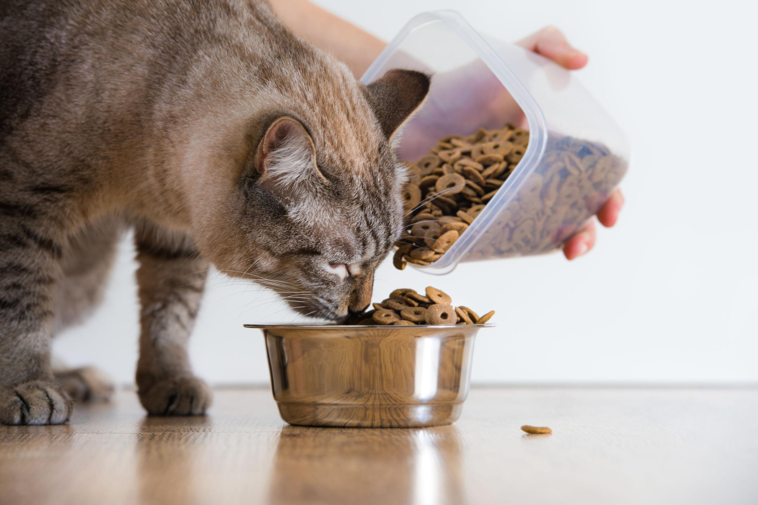 Comida para gato: ¿Cuál es la mejor de 2020?