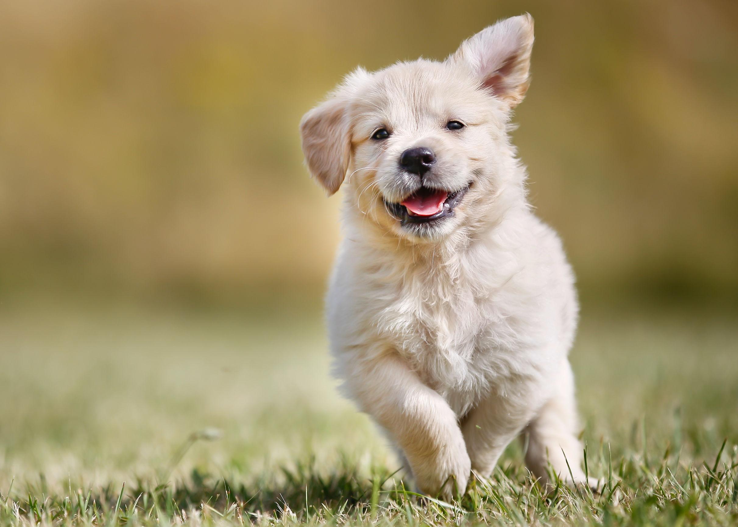 Pastillas para desparasitar perros: ¿Cuál es la mejor del 2021?