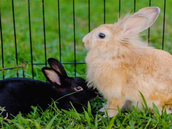 Jaula para conejos: ¿Cuál es la mejor del 2020?