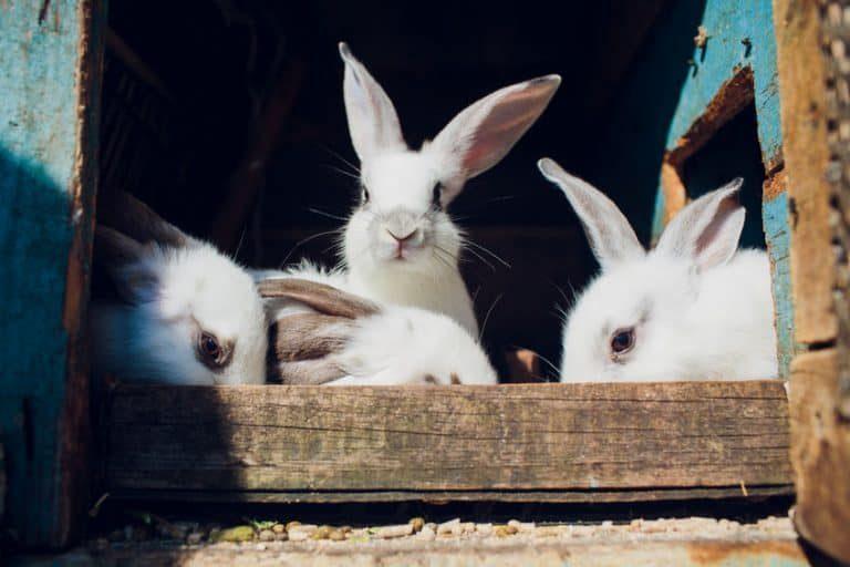 Varios conejos en una jaula