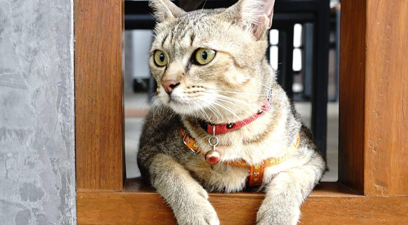 Collar para gato: ¿Cuál es el mejor del 2021?