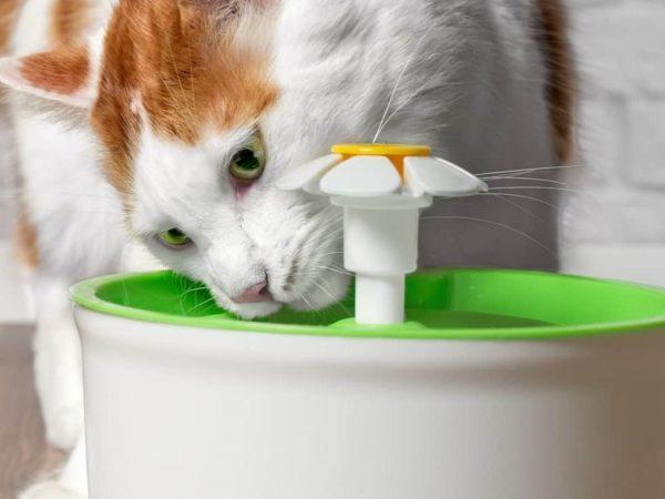Fuente para gatos: ¿Cuál es la mejor del 2020?