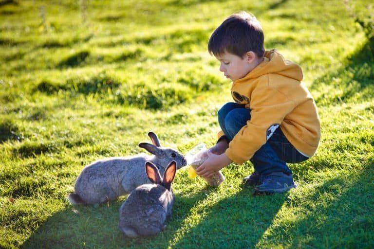 Niño jugando con conejos en el campo