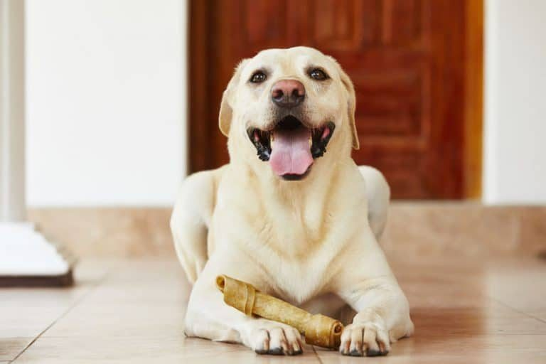 huesos para perro