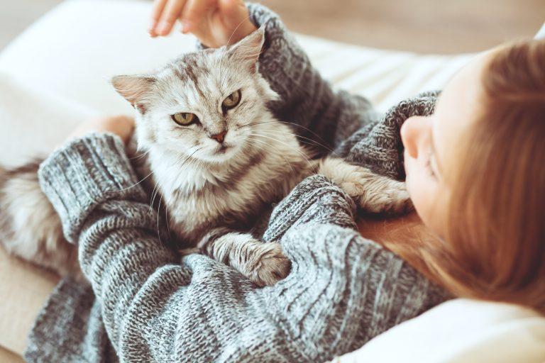 Cómida húmeda para gato-4
