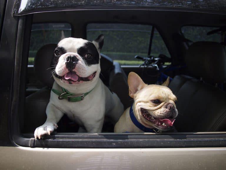 Paseo con mascotas en vehículo