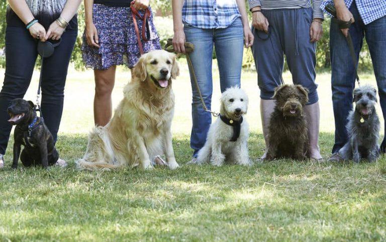 Grupo de personas justo a sus perros