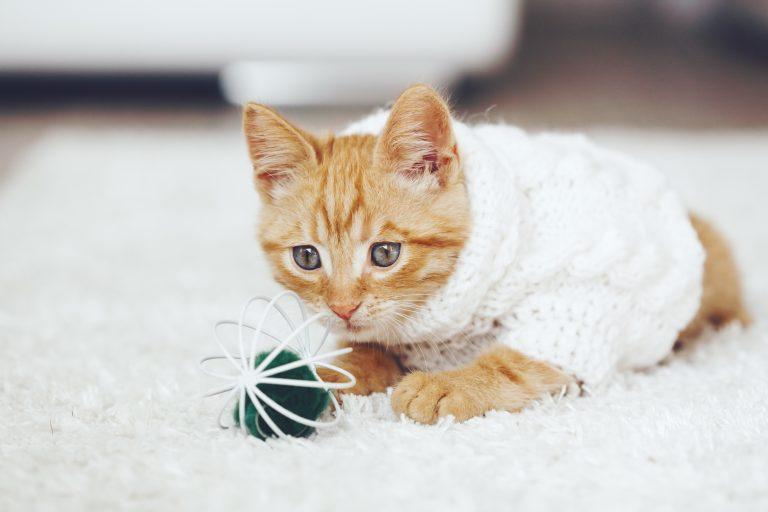 Juguetes para gatos-2
