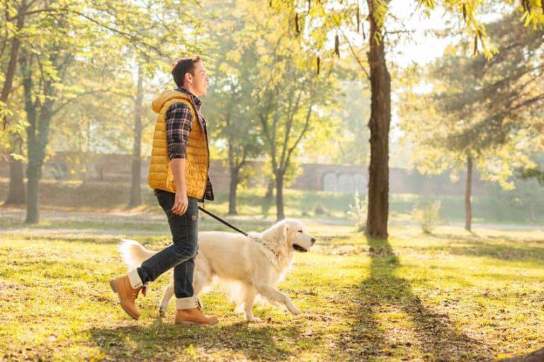 Hombre paseando un perro por un parque