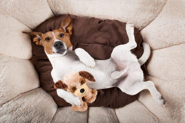 Perro en una cama con peluche