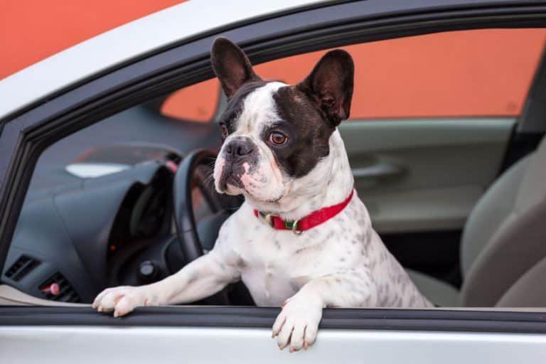 Carro gris detenido y perro adentro