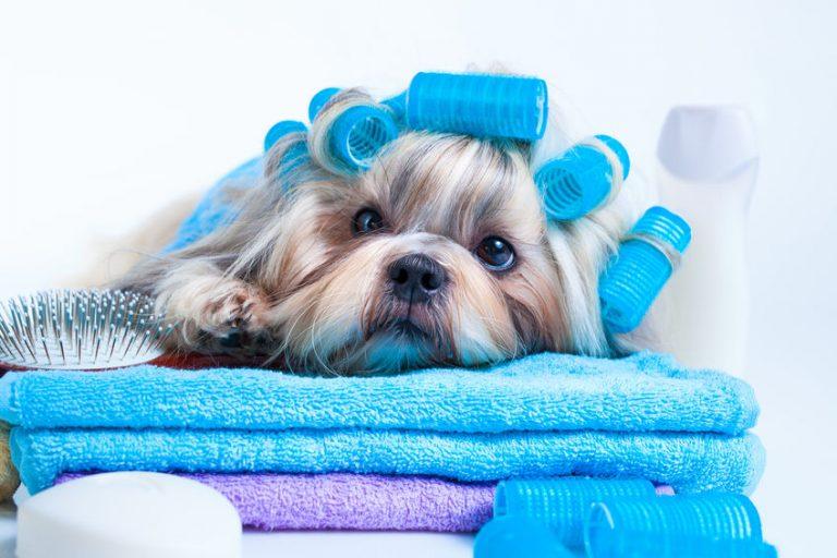 Mascota-después-de-baño