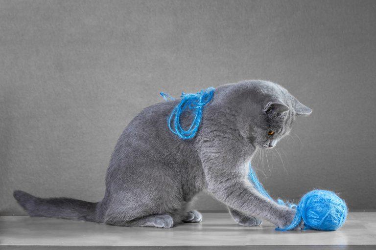 Juguetes para gatos-3