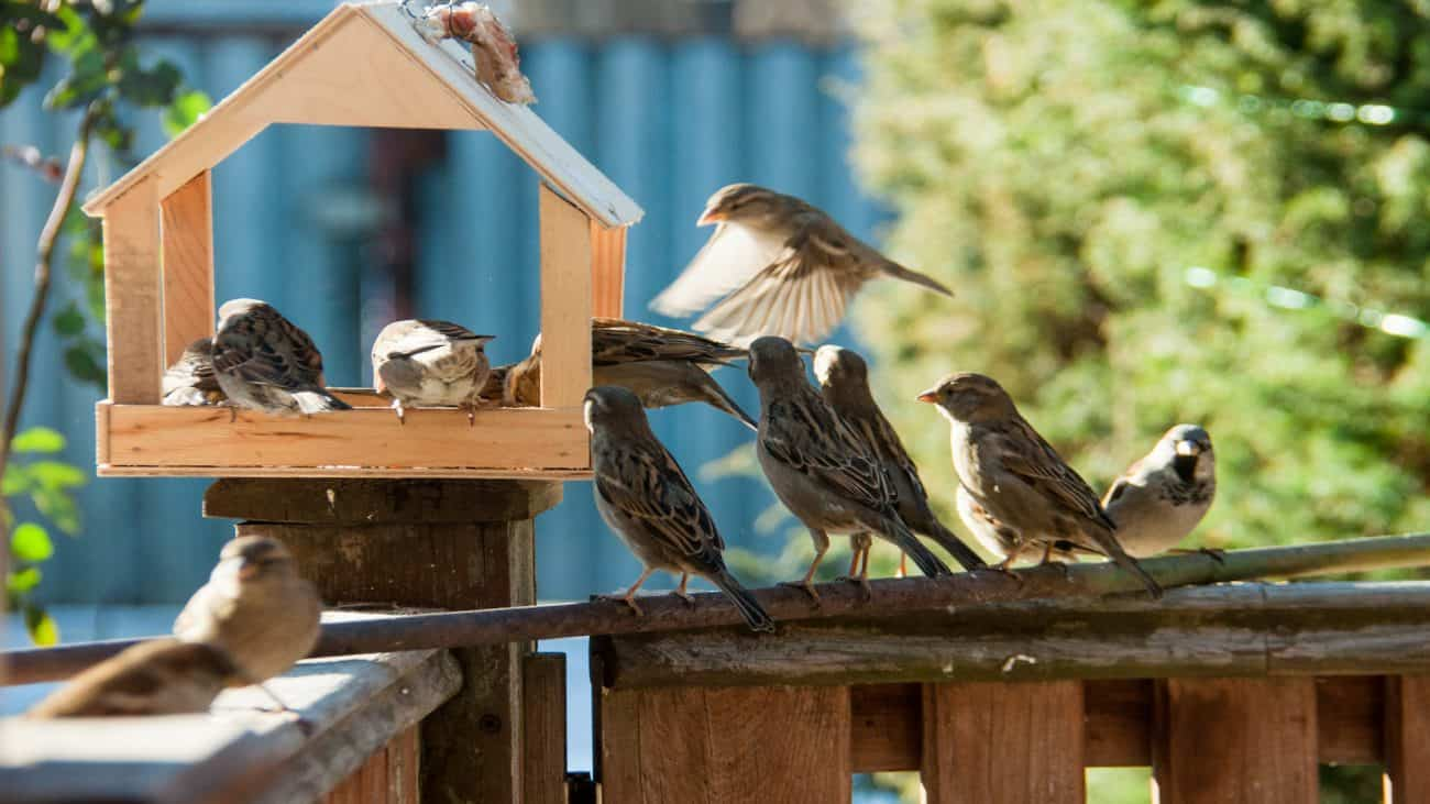 Atraídos por comederos de pájaros