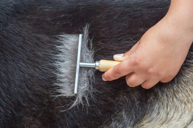 Veterinario-limpiado-pelo-muerto