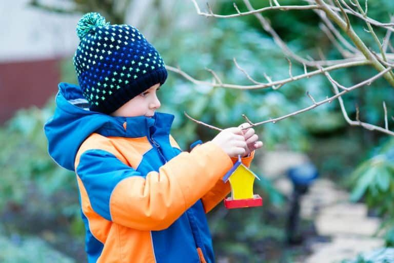 Niño poniendo un comedero de pájaros en un árbol