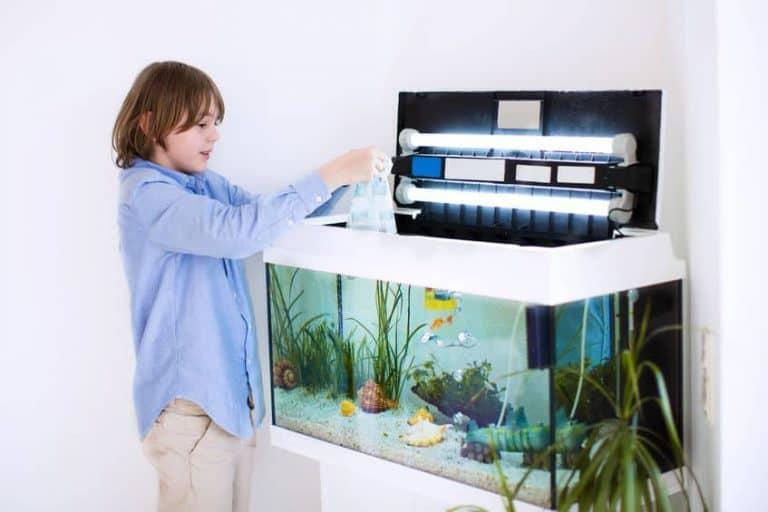 Un niño poniendo arena en un acuario