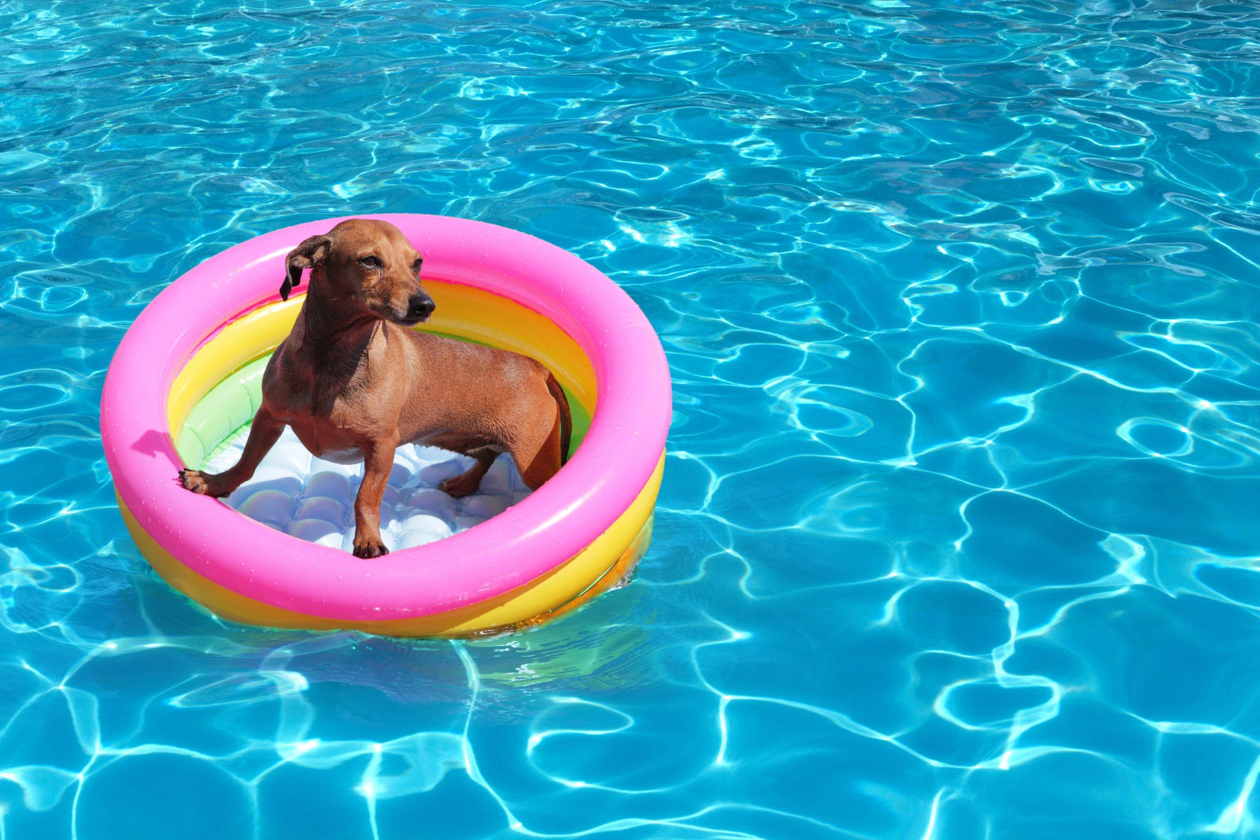 Un perro en una piscina de plástico