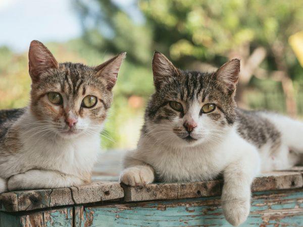 Gatos mirando fijamente la cámara
