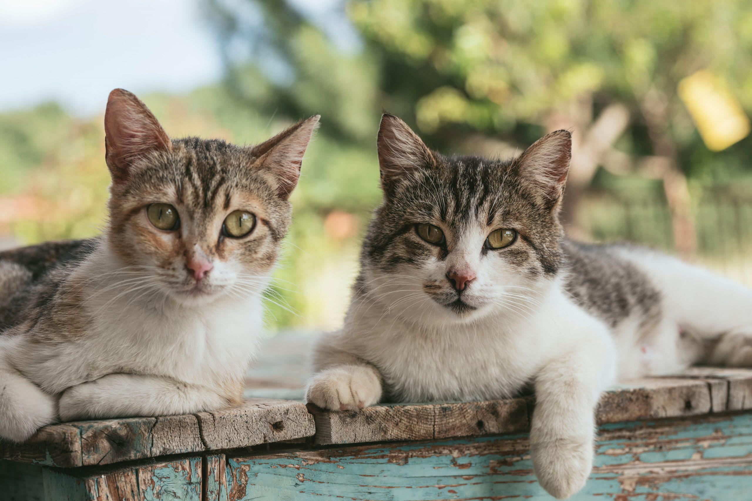Repelente para gatos: ¿Cuál es el mejor del 2020?