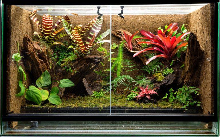 Plantas simulando ambiente tropical