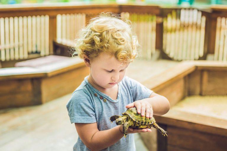 Un niño jugando con una tortuga