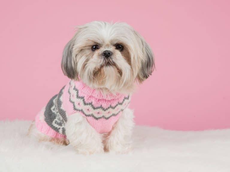 Perro con fondo rosa