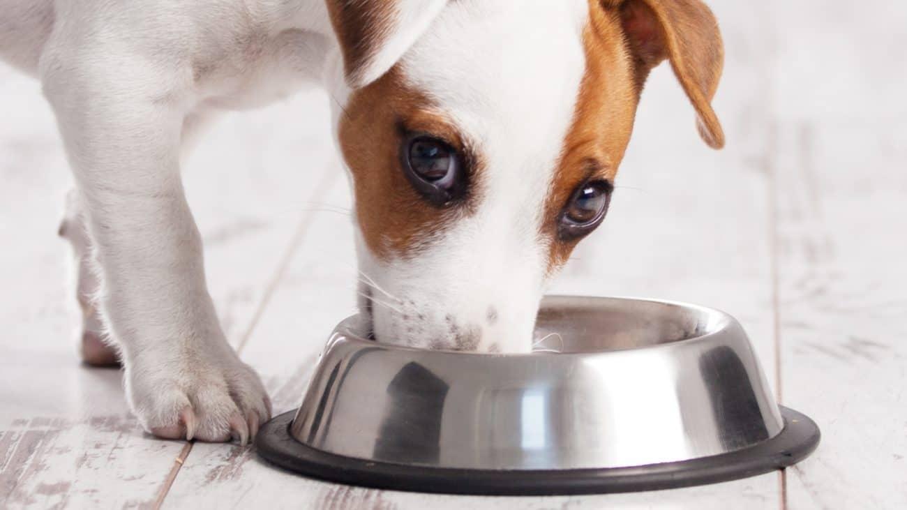 Aceite de salmón para perros: ¿Cuál es el mejor de 2020?