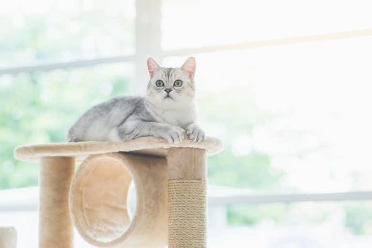 Gato posado en un árbol rascador