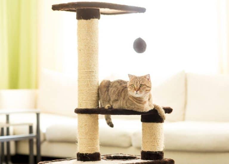 Un gato en un enorme árbol rascador