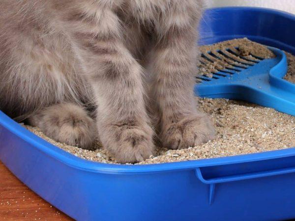 Bandeja de Arena Ovalada Caja de Arena WC para Gatos Global Arenero con Marco para Gatos Figaro