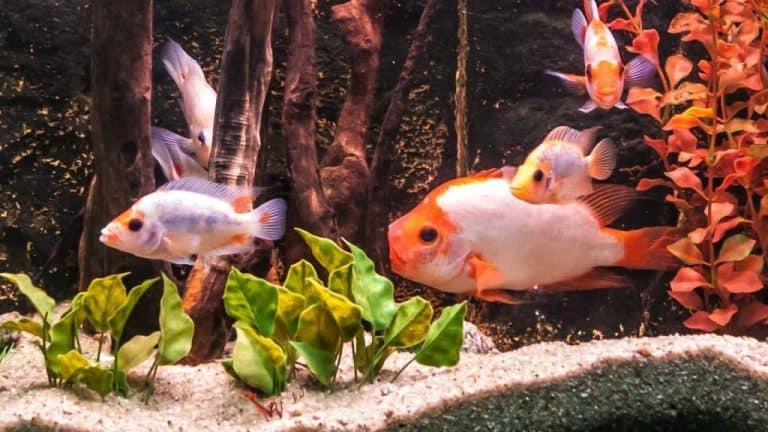 Una pecera con muchos peces