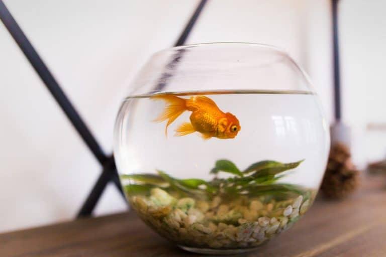 Una pecera con un pez