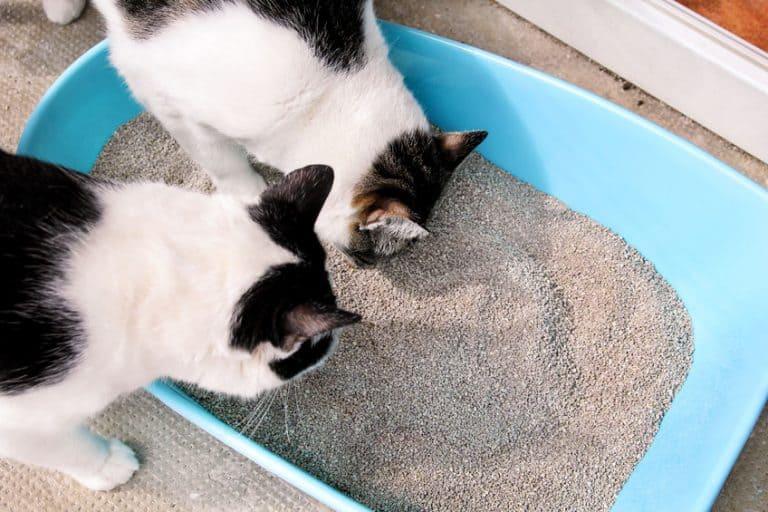 Gatos mellizos