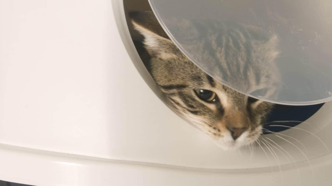 Arenero autolimpiable para gato: ¿Cuál es el mejor del 2020?