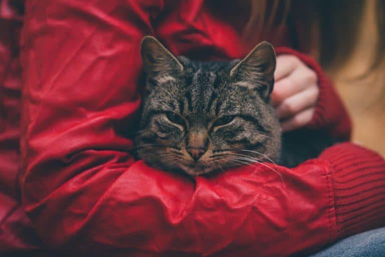 Mujer acariciando gato