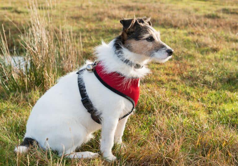 Canino en alerta