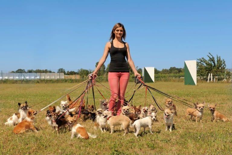 Jauría de perros