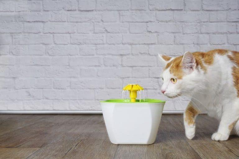 Bebedero para gato