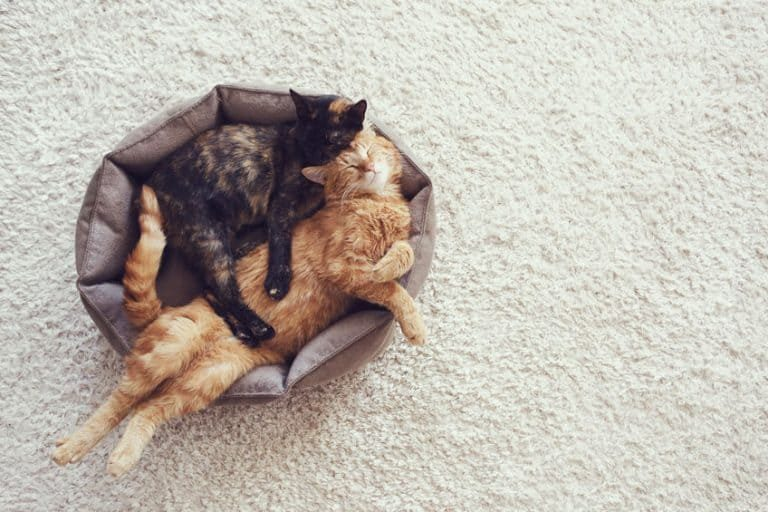 Gatos compartiendo cama