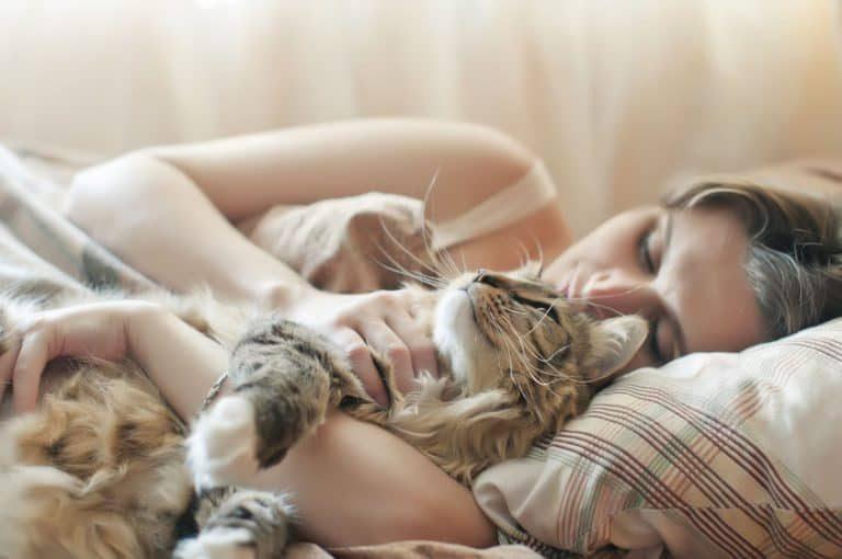 Gato en brazos de su dueña