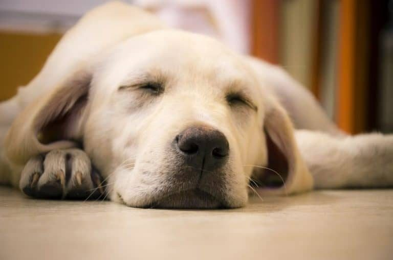 Perro grande durmiendo