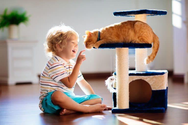 Un niño jugando con un gato