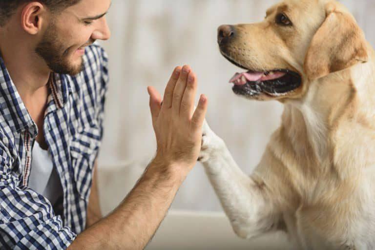 Hombre y perro dándose las palmas