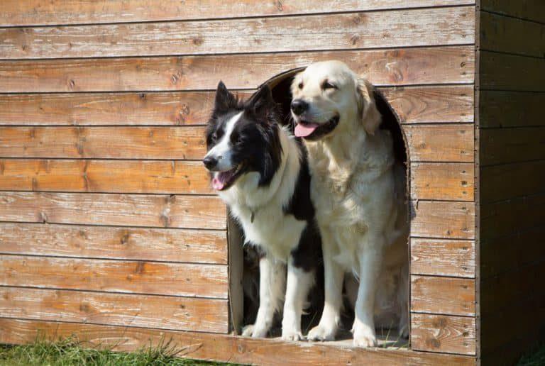 Caseta de madera con dos perros en ella