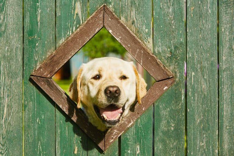 Perro con la cabeza en un agujero
