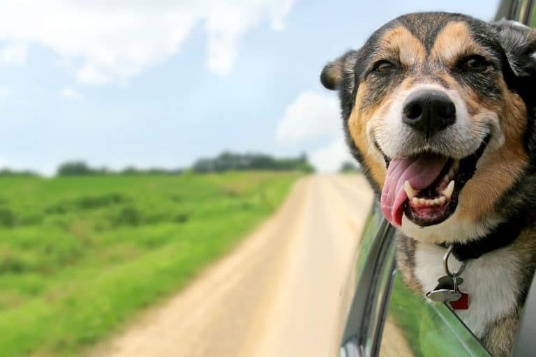 Perro con lengua de fuera
