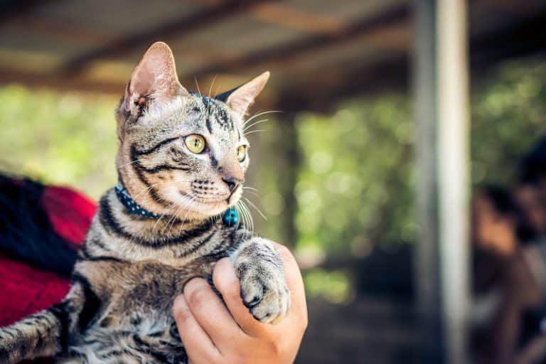 Gatito atrigado