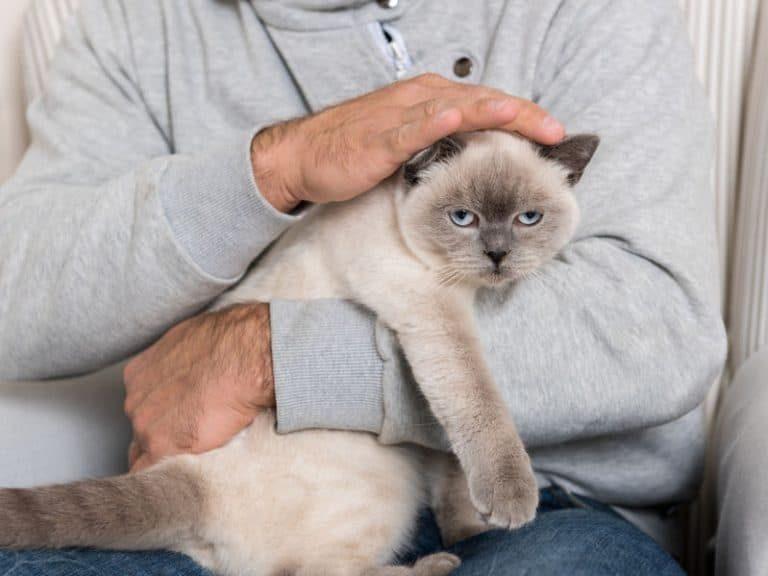 Gato-en-brazos-de-su-dueño