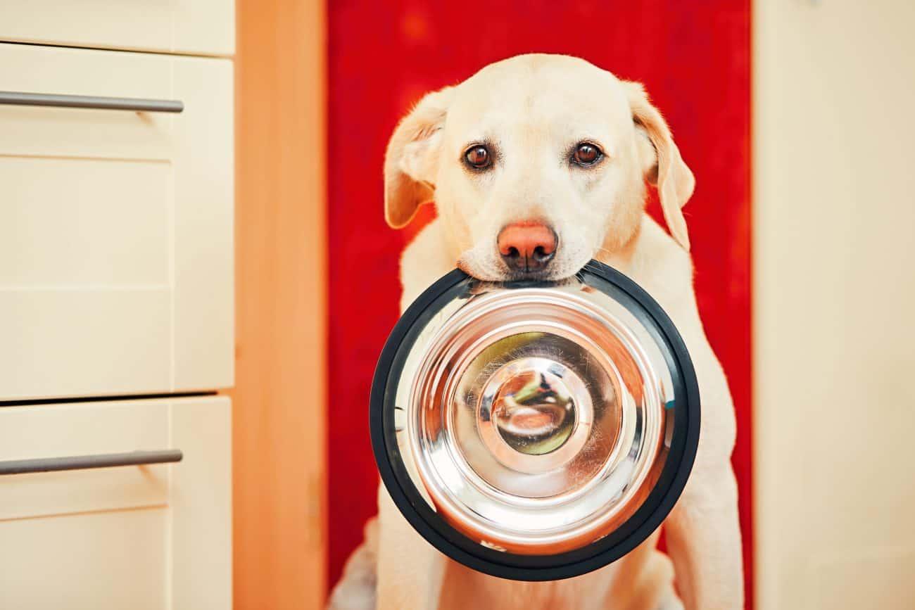 Comida para perro hipoalergénica: ¿Cuál es la mejor del 2020?